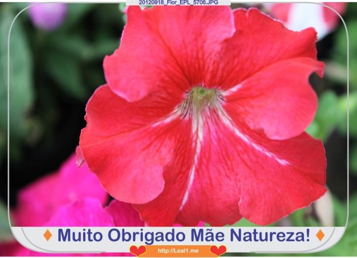 zErT_20120918_Flor_EPL_5706