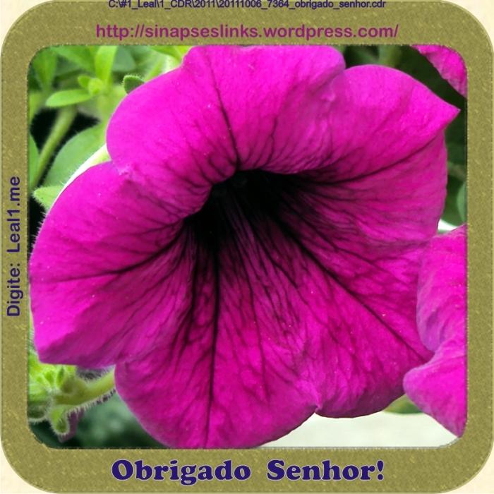 20111006_7364_obrigado_senhor
