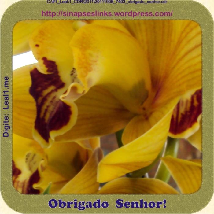 20111006_7403_obrigado_senhor