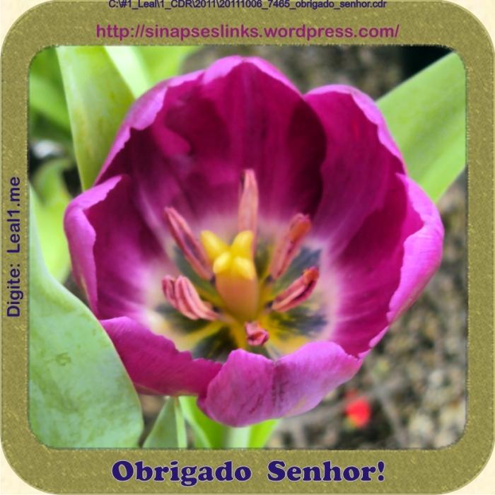 20111006_7465_obrigado_senhor