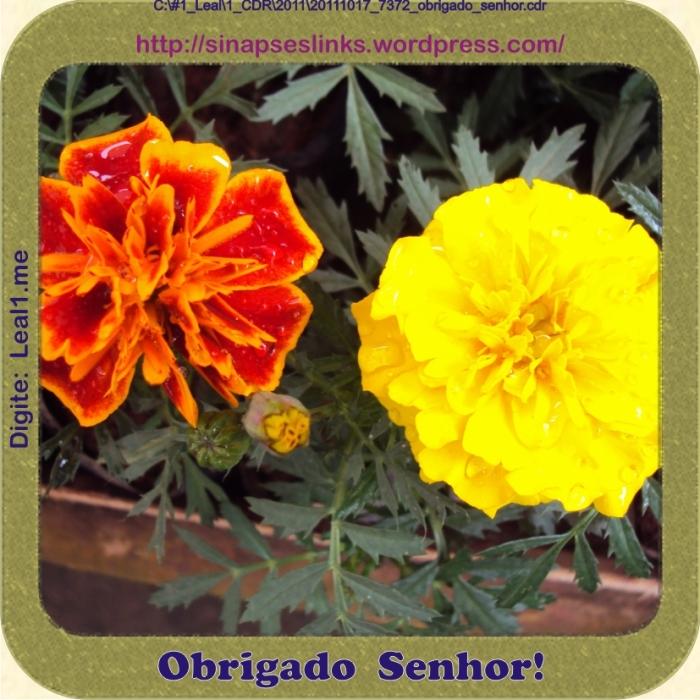 20111017_7372_obrigado_senhor