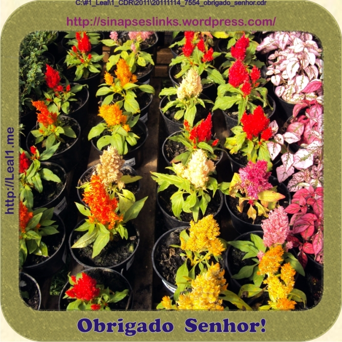 20111114_7554_obrigado_senhor