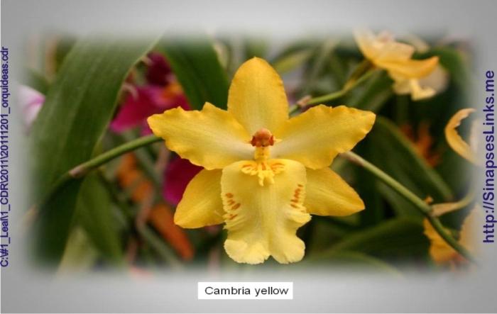 20111201_orquideas09