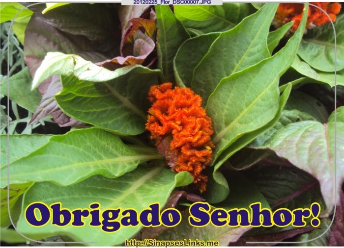 20120225_Flor_DSC00007