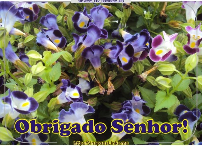 20120225_Flor_DSC00022