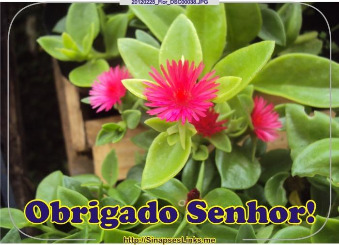20120225_Flor_DSC00038