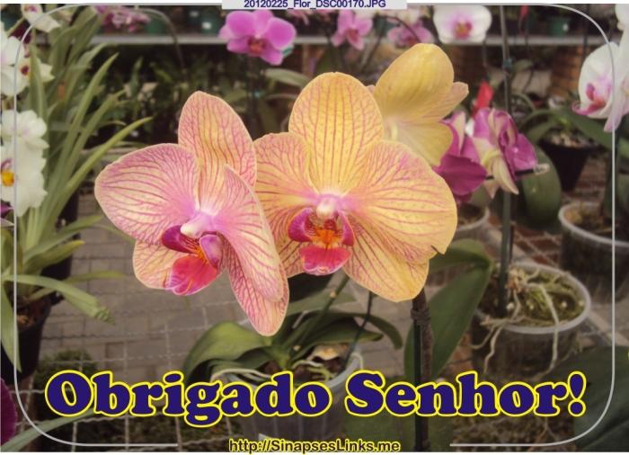 20120225_Flor_DSC00170