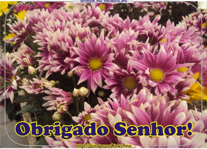 20120225_Flor_DSC00214