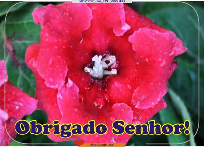 20120617_Flor_EPL_2953