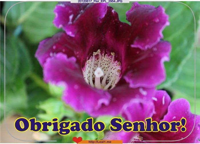 20120617_Flor_EPL_2954