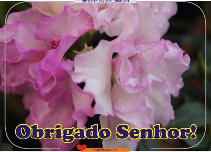 20120617_Flor_EPL_2958