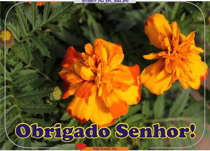 20120617_Flor_EPL_3054