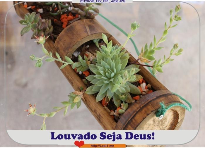 20120726_Flor_EPL_4208