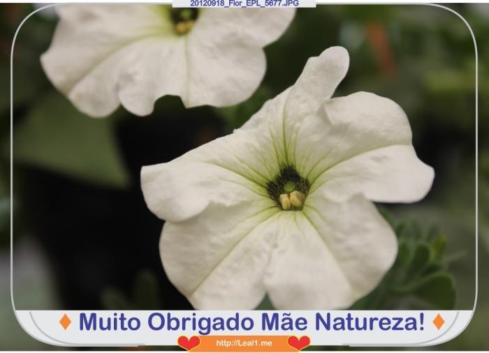 20120918_Flor_EPL_5677