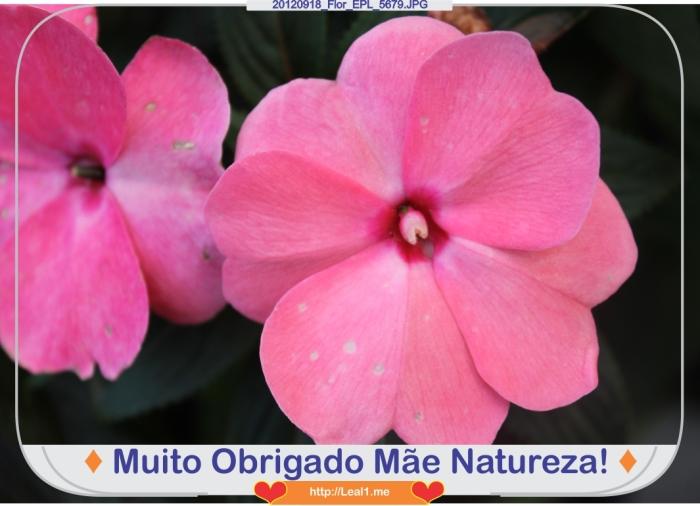 20120918_Flor_EPL_5679