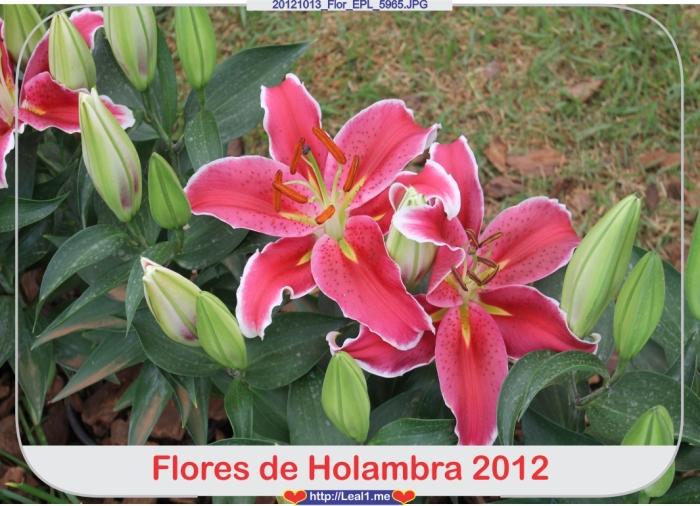 20121013_Flor_EPL_5965
