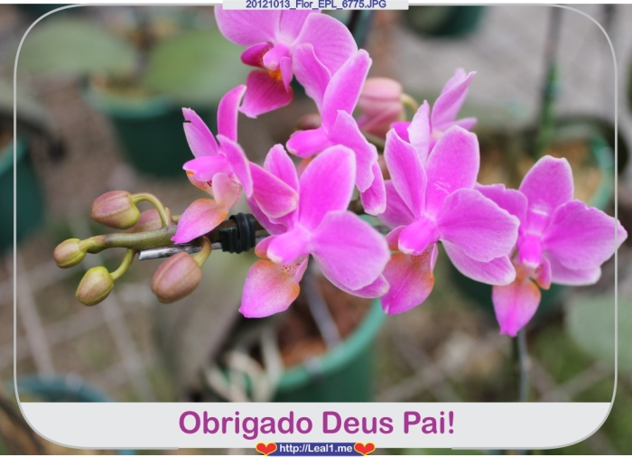 20121013_Flor_EPL_6775