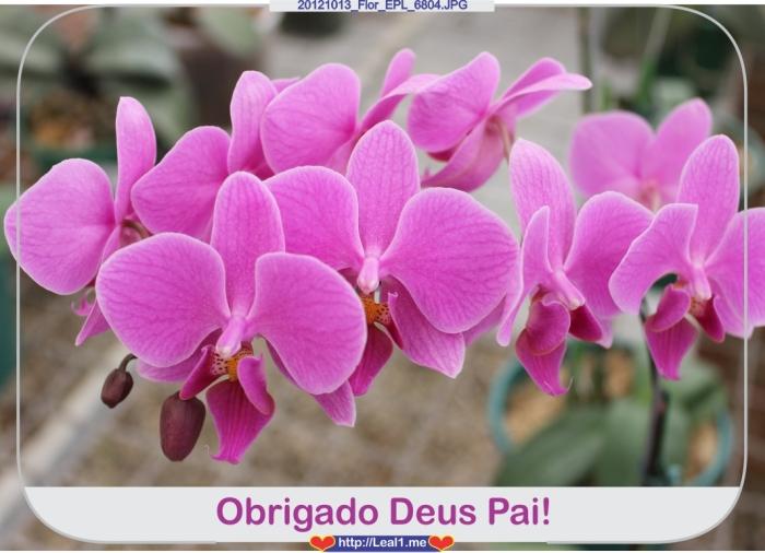 20121013_Flor_EPL_6804