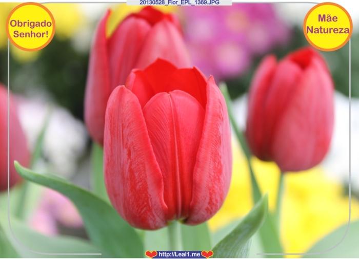 20130528_Flor_EPL_1369