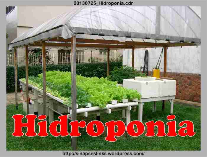 20130725_Hidroponia