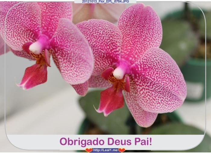 fRuT_20121013_Flor_EPL_6764