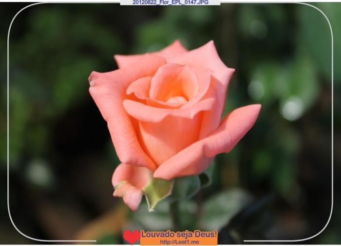 HCkF_20120822_Flor_EPL_0147