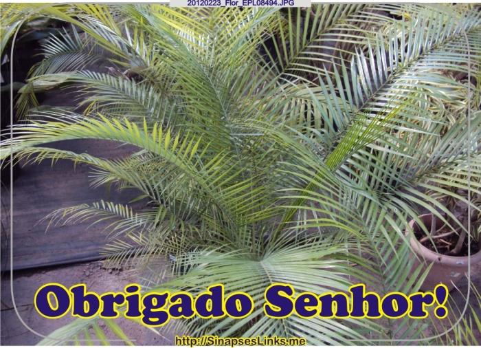 Jfmw_20120223_Flor_EPL08494