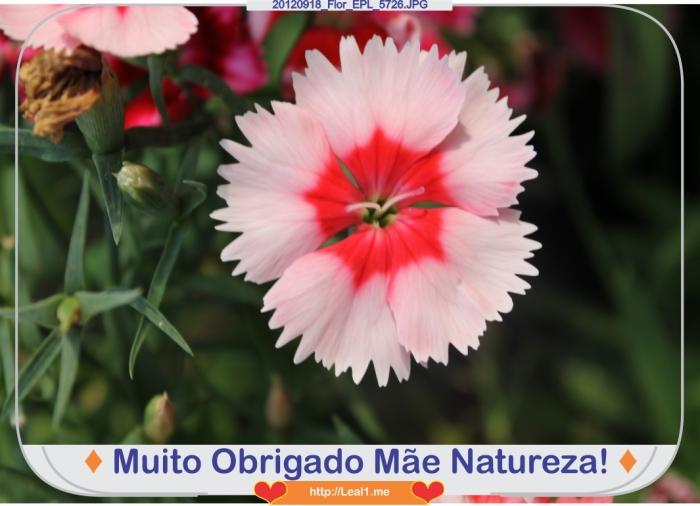 lYeN_20120918_Flor_EPL_5726