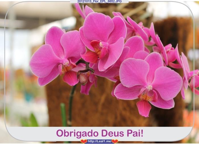 oSLV_20121013_Flor_EPL_6852