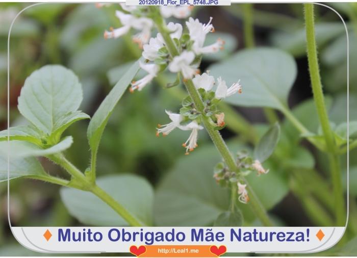 uGiF_20120918_Flor_EPL_5748