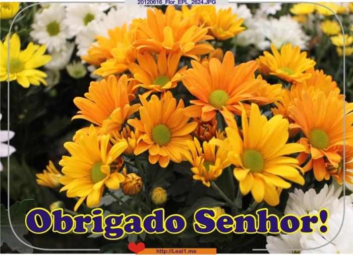 vNvz_20120616_Flor_EPL_2624