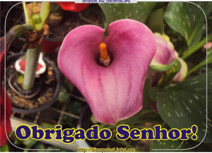 ZxHe_20120225_Flor_DSC00193