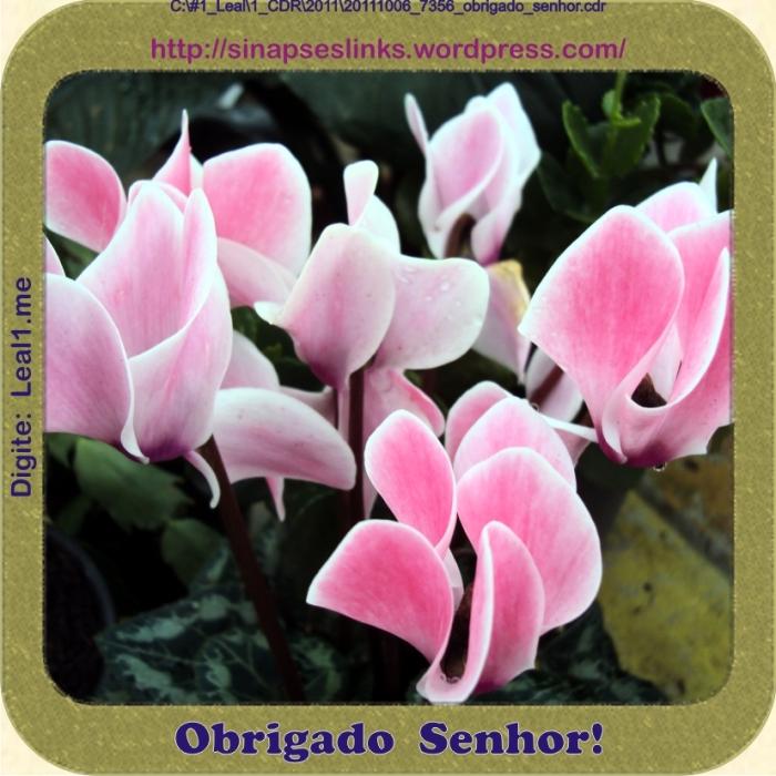 20111006_7356_obrigado_senhor