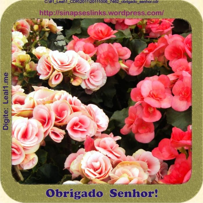 20111006_7462_obrigado_senhor
