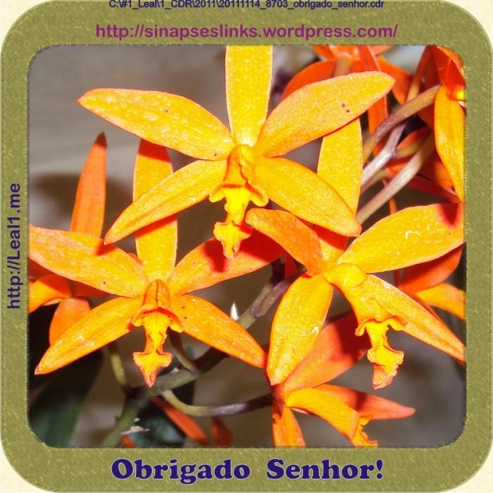 20111114_flor_8703_obrigado_senhor