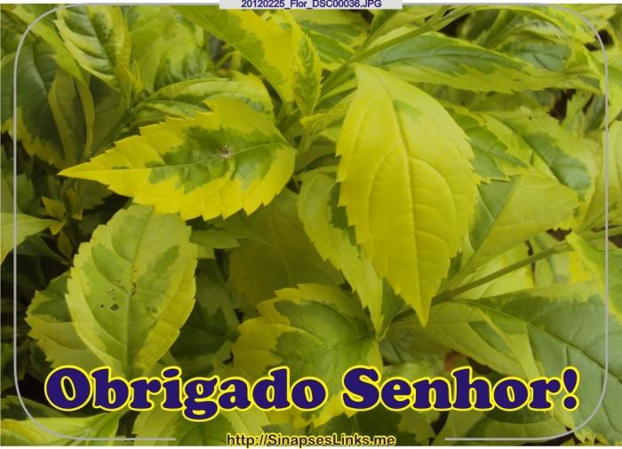 20120225_Flor_DSC00036
