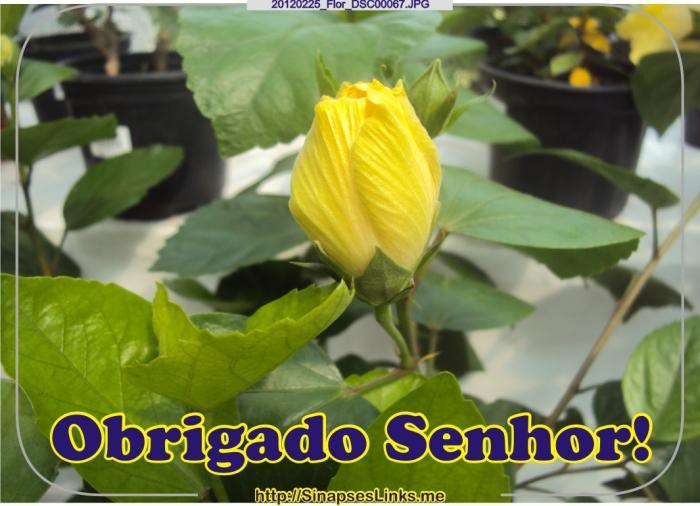 20120225_Flor_DSC00067