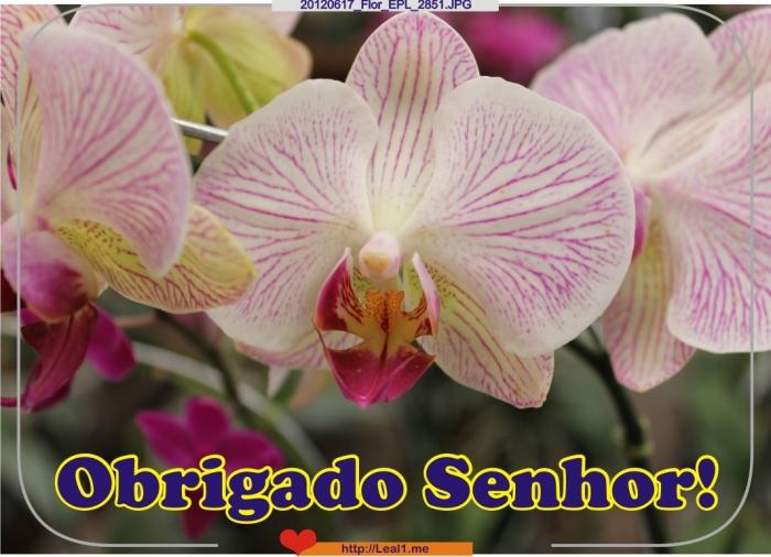 20120617_Flor_EPL_2851