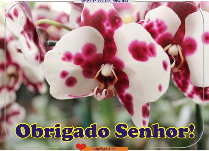 20120617_Flor_EPL_2852
