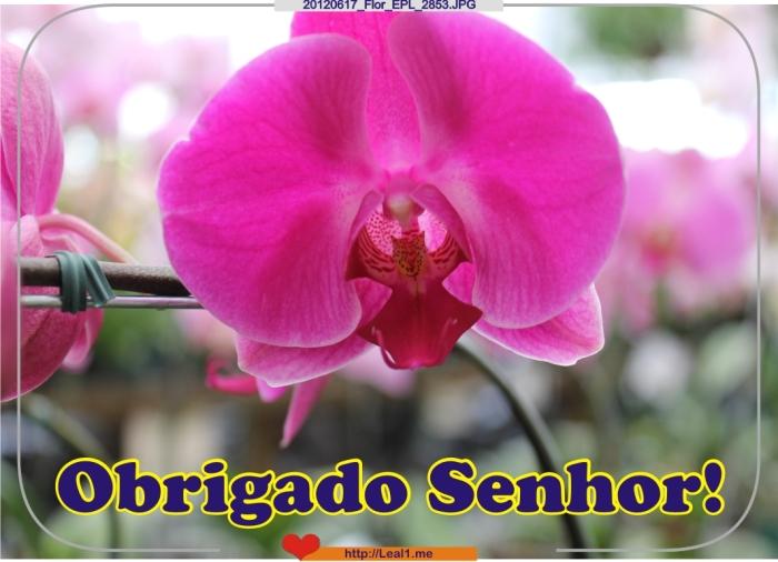 20120617_Flor_EPL_2853