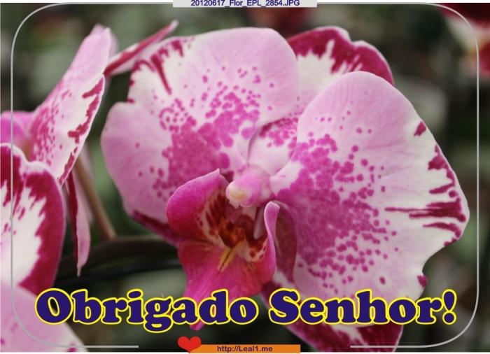 20120617_Flor_EPL_2854