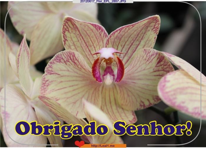 20120617_Flor_EPL_2857
