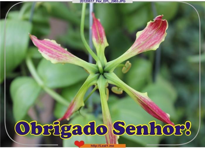 20120617_Flor_EPL_2963