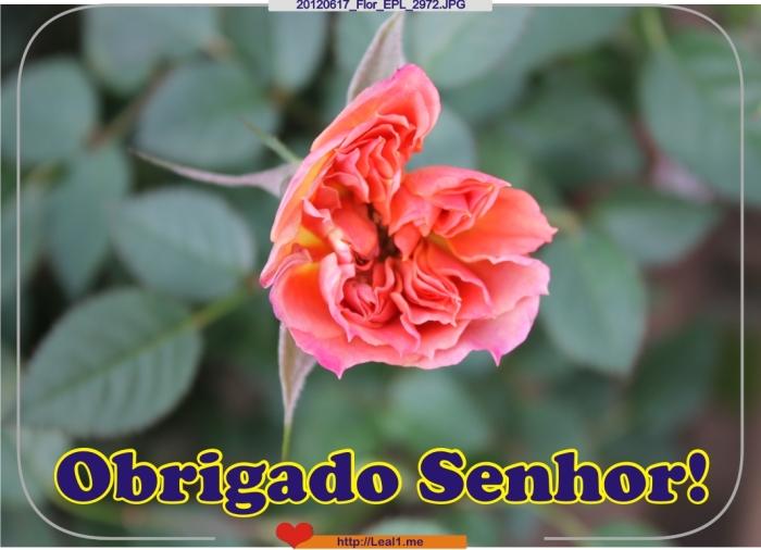 20120617_Flor_EPL_2972