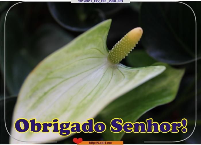 20120617_Flor_EPL_2990