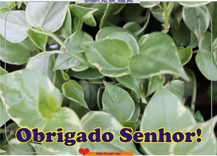 20120617_Flor_EPL_3006