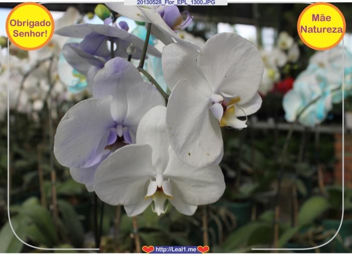 20130528_Flor_EPL_1300