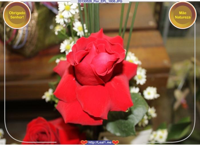 20130528_Flor_EPL_1606