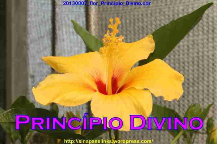 20130807_flor_Princípio_Divino