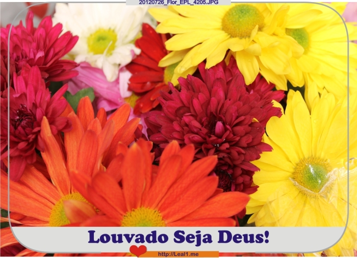 QetL_20120726_Flor_EPL_4205